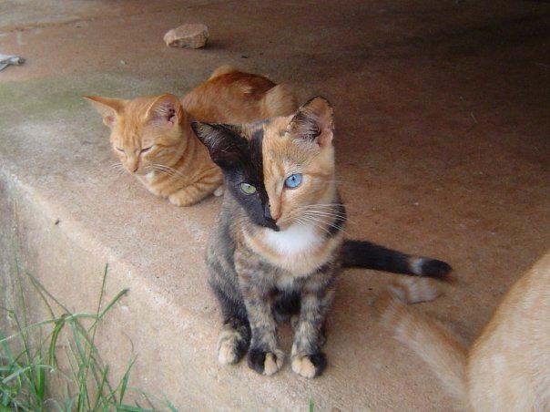 cool-cat.jpg (41 KB)