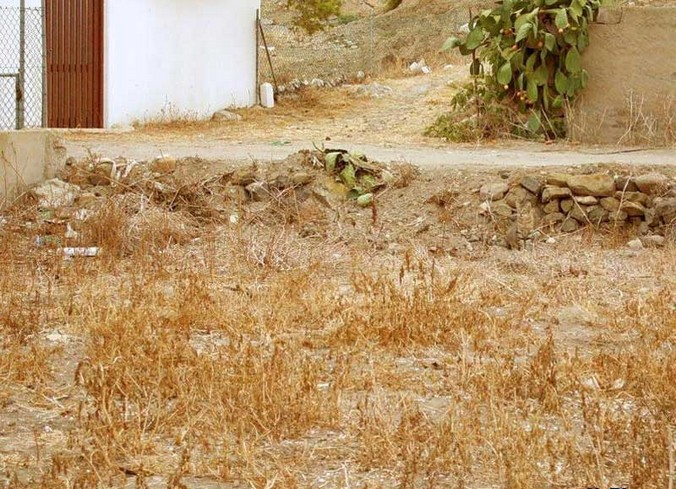 find-the-cat-2.jpg (142 KB)