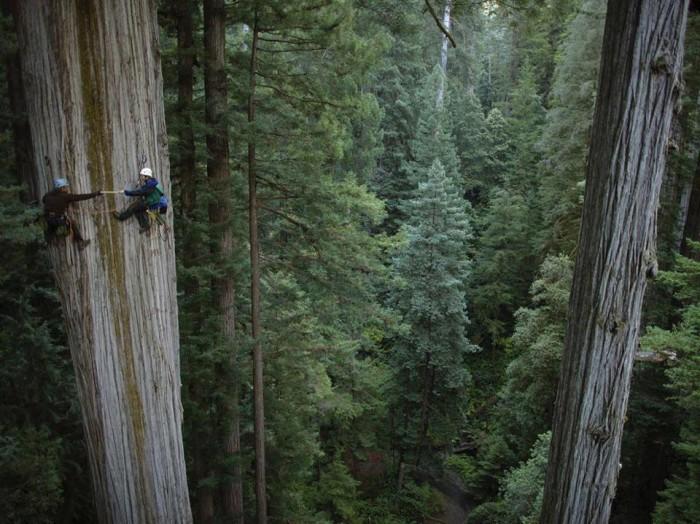 tree-climb.jpg (132 KB)