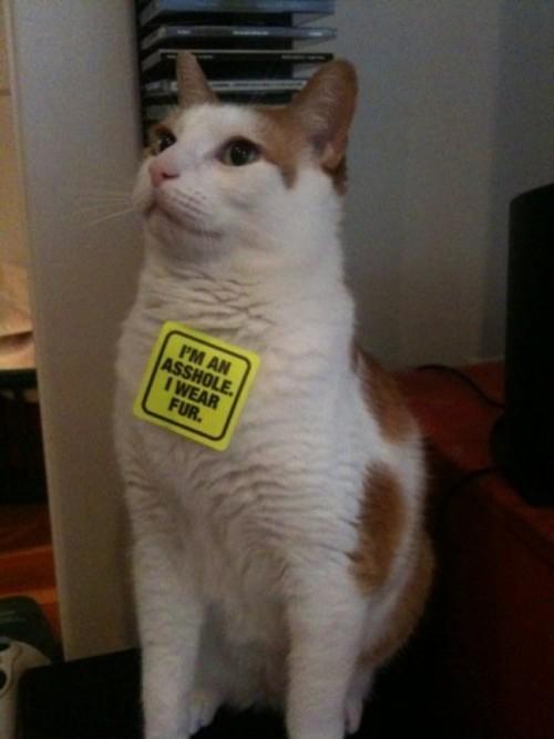 PETA_sticker.jpg (50 KB)