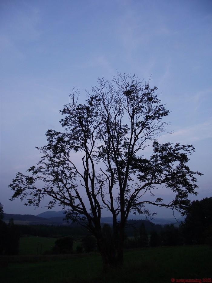 nightly_tree_and_sky.jpg (452 KB)
