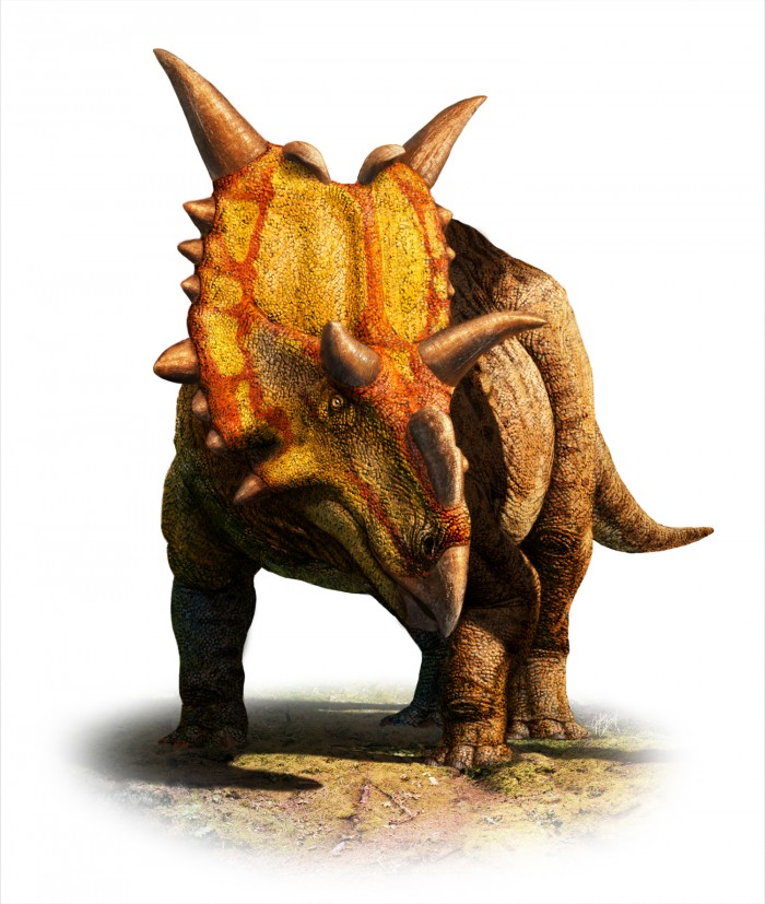 Xenoceratops_Cutout_White_1500.jpg (1 MB)