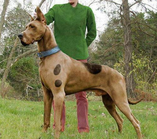 Scooby-doo-in-real-life.jpg (77 KB)