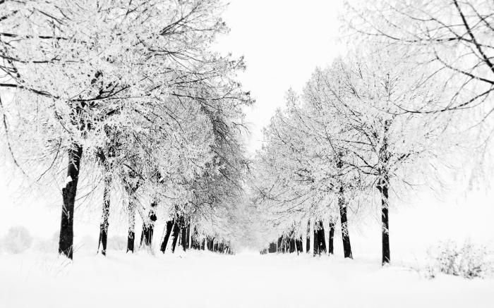 snow.png (1 MB)