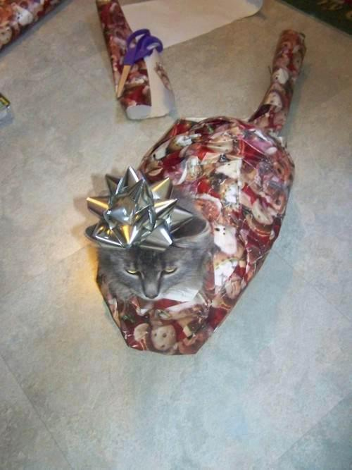 77b How to wrap a cat funny Christmas Cats animals