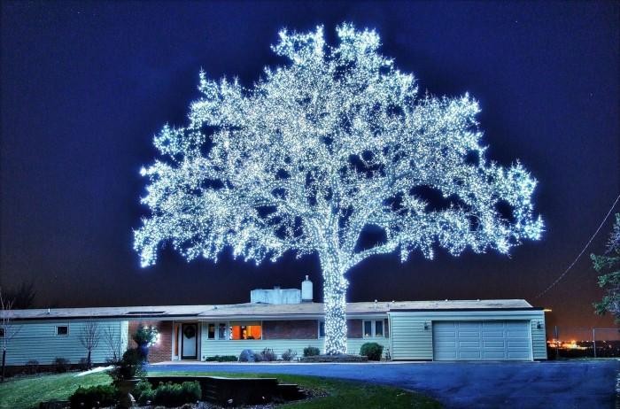 42 700x462 39,760 Christmas lights  tree lights Christmas awesome