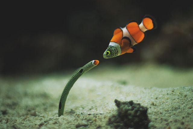 fishfaceoff.jpg (36 KB)
