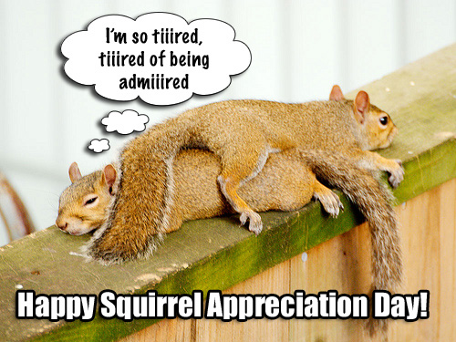 tumblr kwix2sPWZl1qznybeo1 500 Squirrel Appreciation Day Jan 21 tree squirrels Squirrel Appreciation Day squirrel nuts mlk jr mlk fuzzy furry Day cute Appreciation adorable