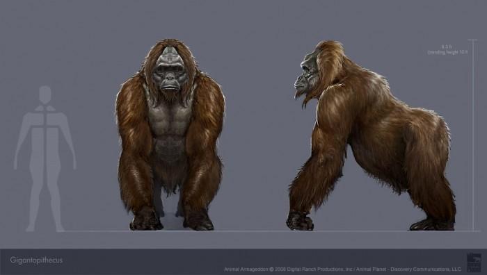 Gigantopithecus.jpg (71 KB)
