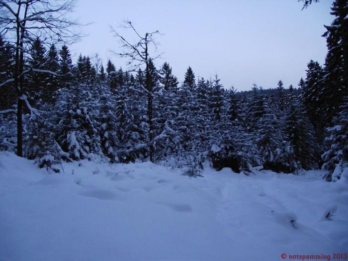 snow_1.jpg (426 KB)
