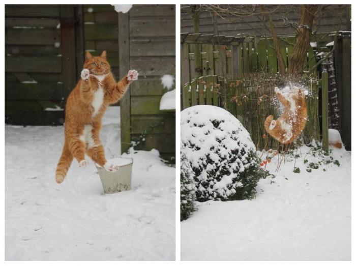 cat1.jpg (66 KB)