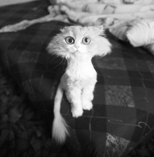 hammerhead-cat.jpg (77 KB)