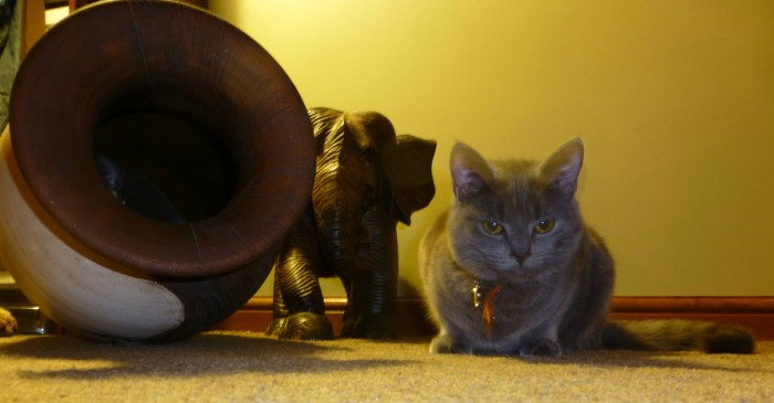 Cats-dexter.jpg (511 KB)