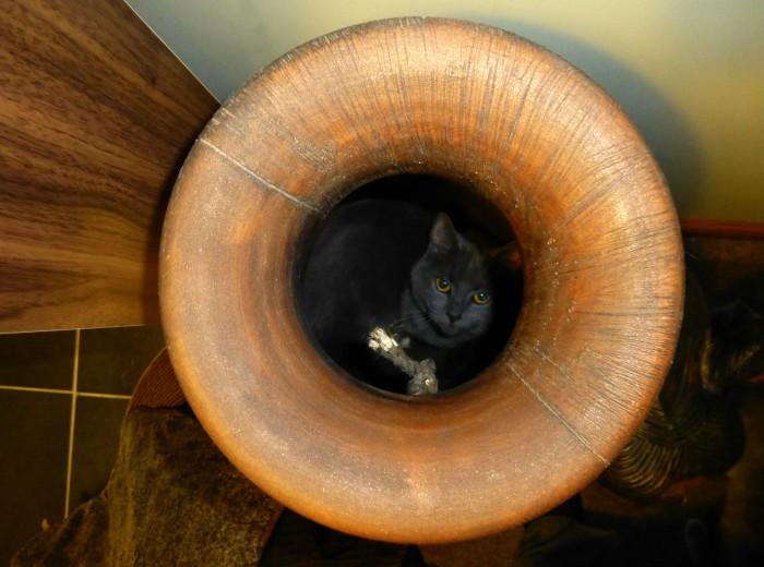 Cats-macy-in-pot.jpg (739 KB)