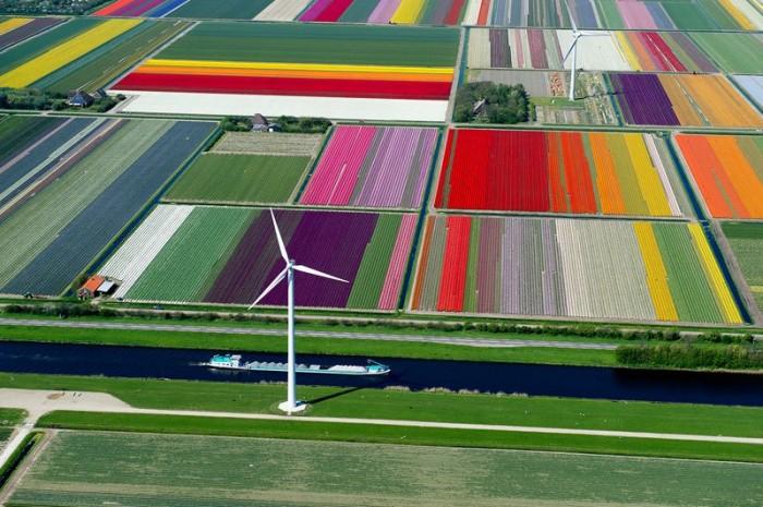 netherlands-tulip-fields.jpg (132 KB)