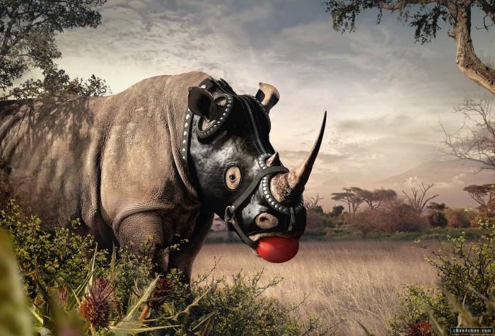 Rhino_Gimp.jpg (266 KB)