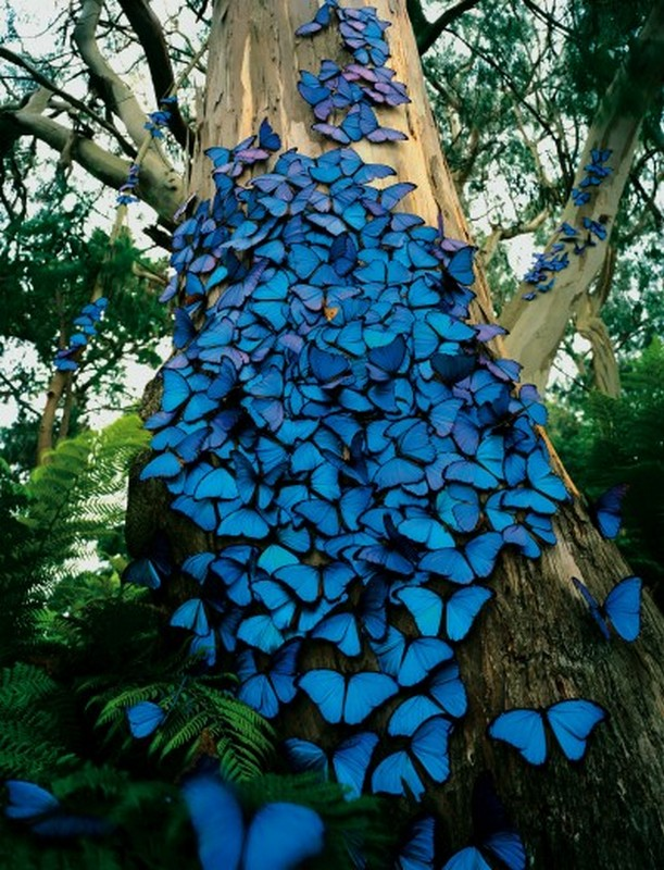 blue-butterflies.jpeg (173 KB)