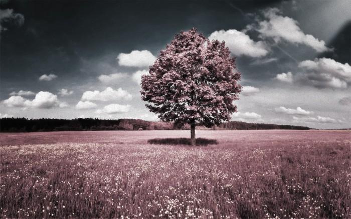 rose-treescape.jpg (440 KB)