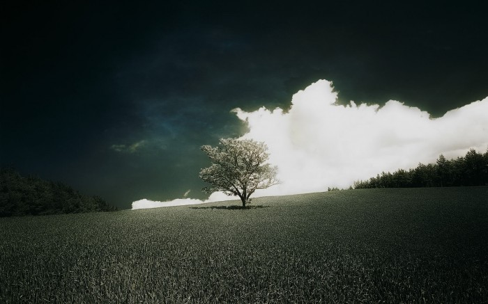 treescape.jpg (417 KB)