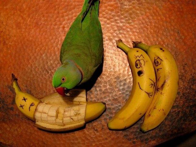 Banana-Eating-Parrot.jpg (57 KB)