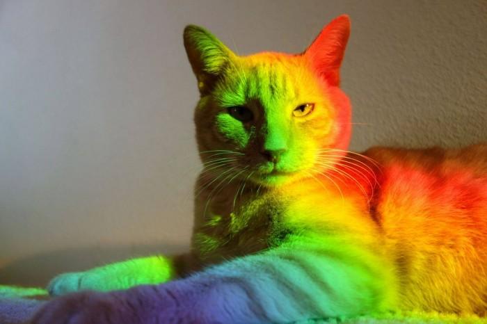 catbow.jpg (79 KB)