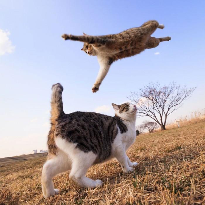 Oh-Its-a-Cat-Wrestling.jpg (144 KB)