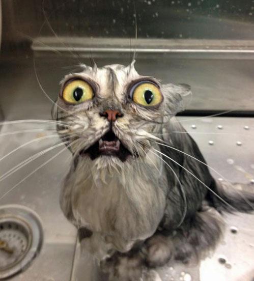 trauma-cat.jpg (73 KB)