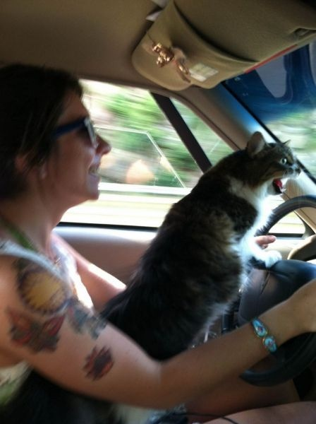 kittyroadrage.jpg (58 KB)