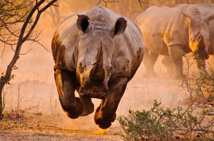air_rhino.jpg (265 KB)