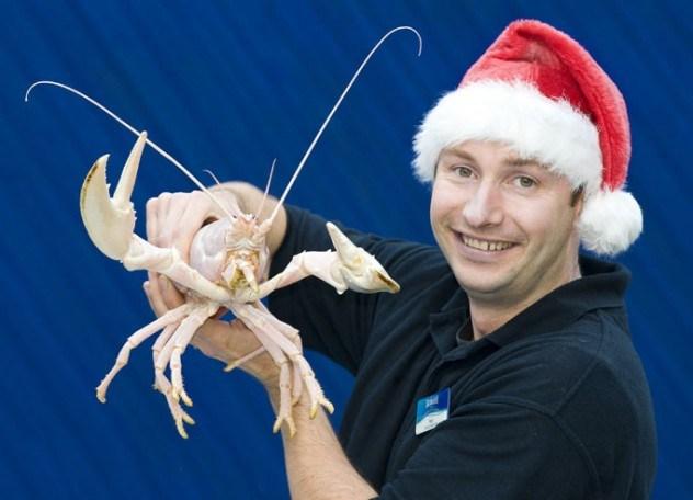 albino-Lobster1_682_1421714a-e1375841619876.jpg (51 KB)