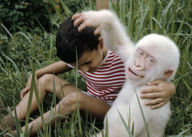 albino-gorilla-e1375842114126.jpg (74 KB)