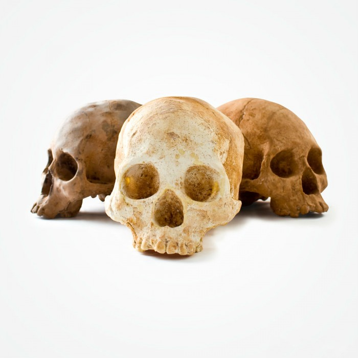 CHOCOLATE-SKULLS.jpg (98 KB)