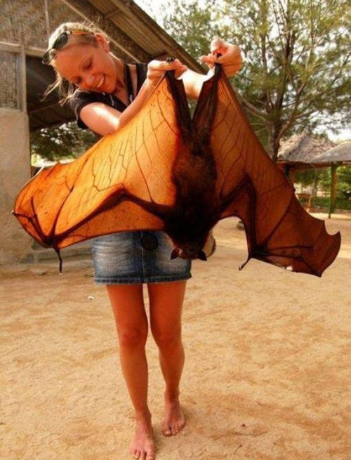 bat-girl-1.jpg (121 KB)