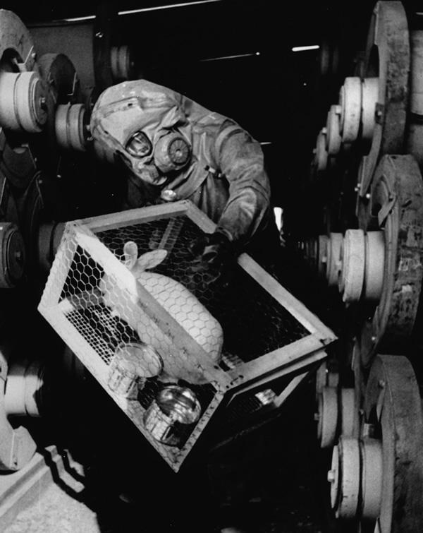 sarin-test-rabbit.jpg (103 KB)
