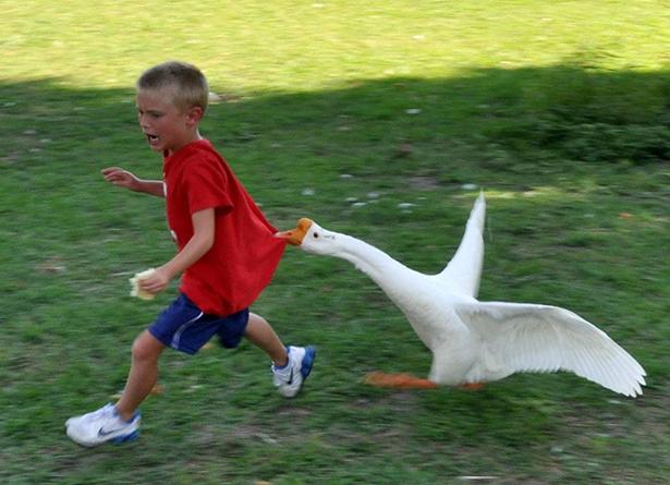 duck-duck-duck.jpg (240 KB)