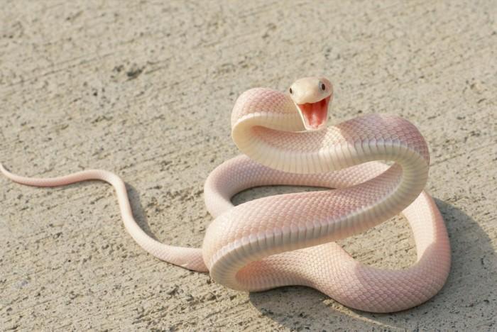 snakejoy.jpg (143 KB)