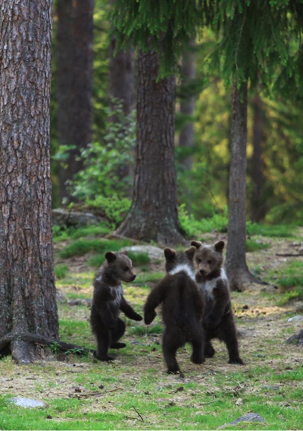 bears.png (859 KB)