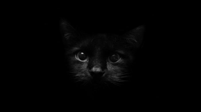 schwarzer-kater.jpg (100 KB)