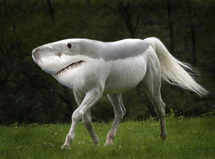 sharkhorse.jpg (83 KB)