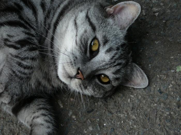 onlyhdwallpapers-cats-desktop-1600x1200-hd-wallpaper-915251.jpg (618 KB)