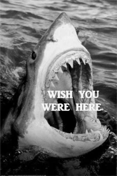 sharkwish.jpg (31 KB)