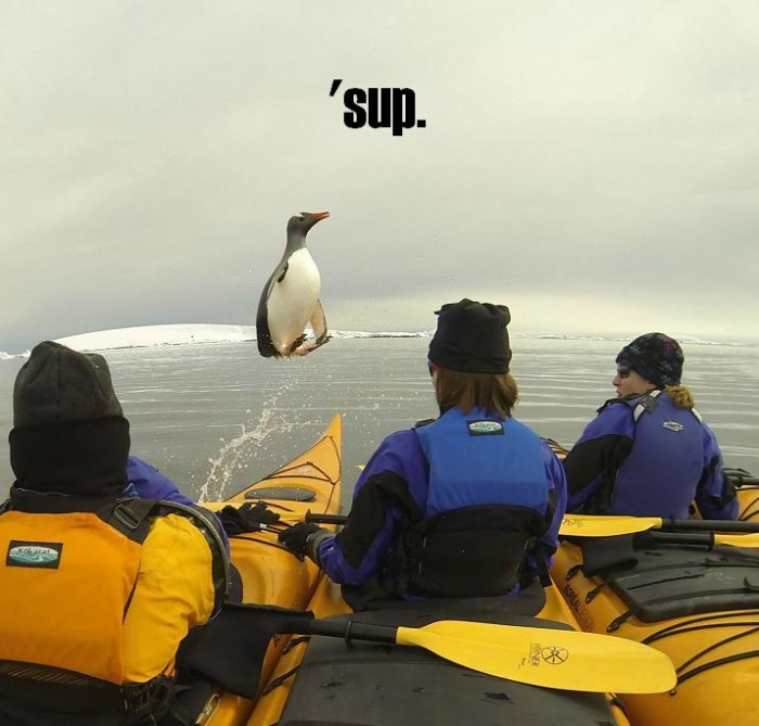penguin_sup.JPG (53 KB)