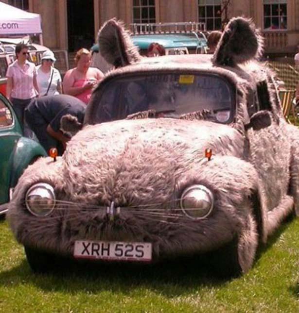 animal_cars_014_11212013.jpg (82 KB)