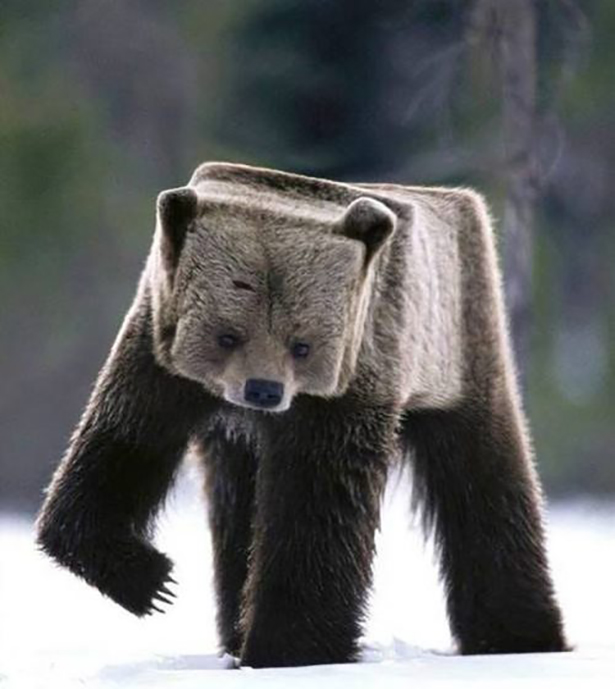 SQUEAR SQUEAR wtf SQUEAR square interesting funny cute cut as hell animals bear awesome