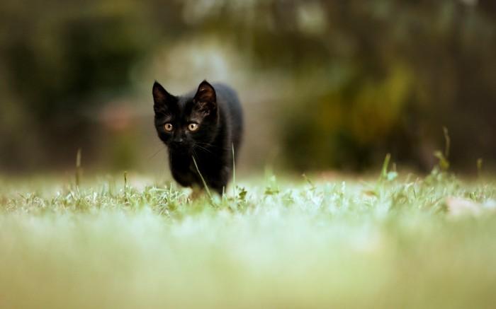 cats_black_cat_hdr_photography_desktop_1920x1200_hd-wallpaper-1263643.jpg (324 KB)