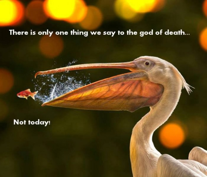 There-is-only-one-thing-we-say-to-the-god-of-death…NOT-TODAY-700×599.jpg
