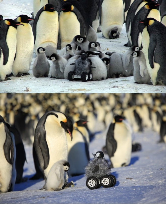 pingurover Penguin Rover Science! rover penguin Nature