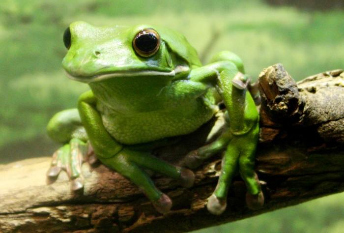 deviantart-frog-i-by-daniellerabbit-d4d5liw.jpg (2 MB)