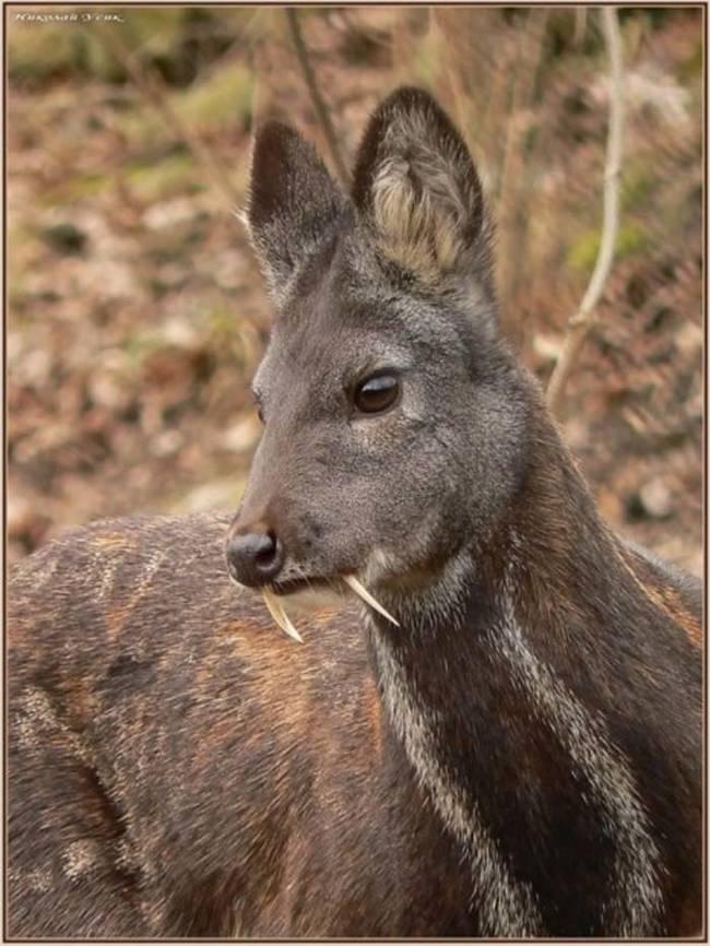 vampire-deer1.jpg (95 KB)