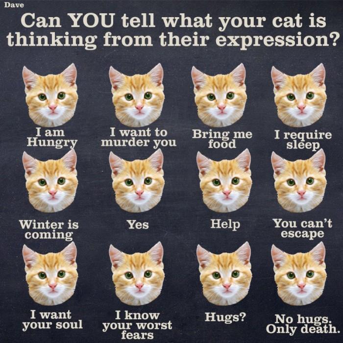 catthinking.jpg (171 KB)